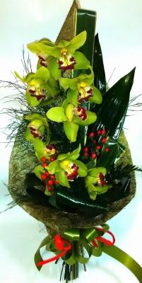 Clássicas Orquídeas Verdes